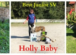 Holly Baby Best junior Special Dog show